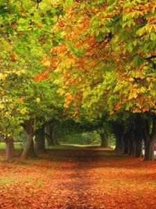 fall-05_18770769