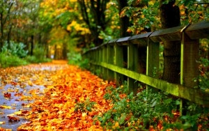 Autumn-Leaves-on-the-Street